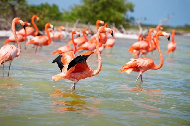 (Créditos: ©SEFOTUR) http://imgec.trivago.com/contentimages/press/images/yucatan.jpg