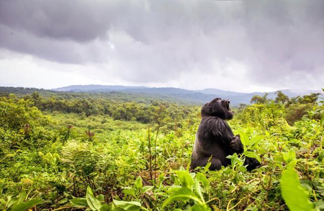 Rwanda. National Geographic.