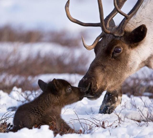 Reindeer and Baby.jpeg