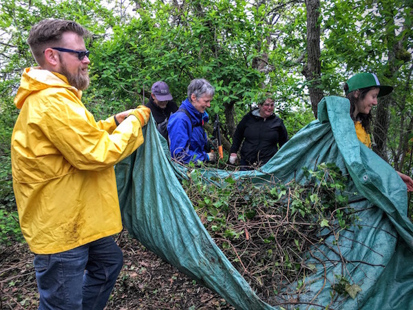 Benevity volunteers remove invasive species of plants from Uplands Park in Victoria, BC