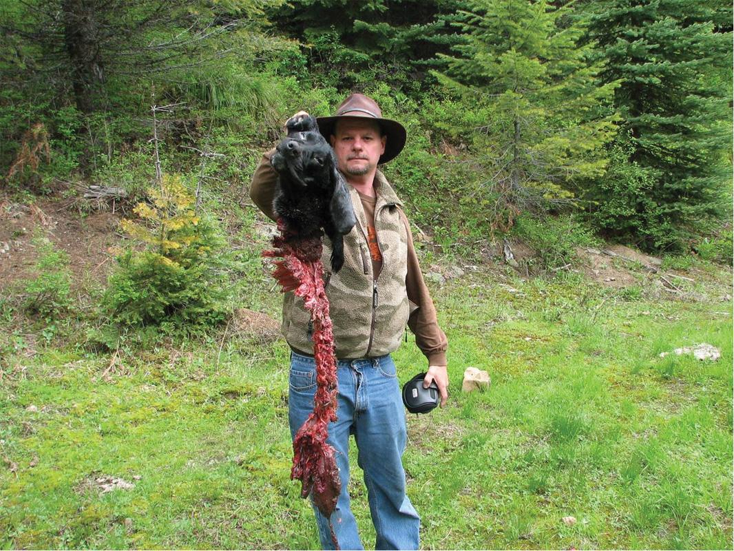 Predators killing Pets