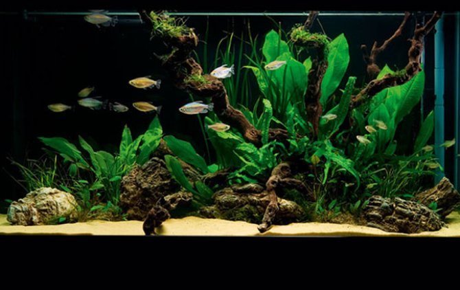 Aquarium Plants Uk