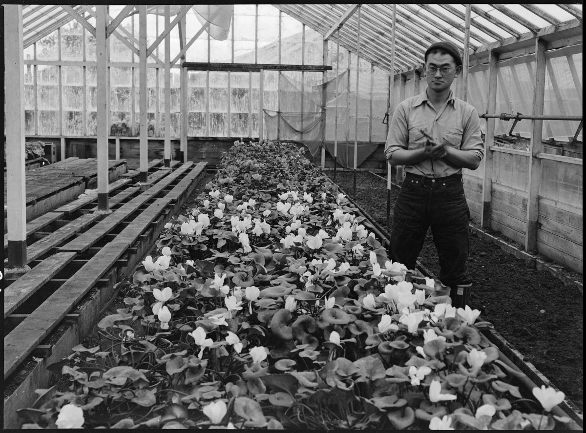 PRINT AVAILABLE San Leandro, California. Greenhouse on nursery operated, before evacuation, by horticultural experts of Japanese ancestry. Many of the Nisei (born in this country) attended leading agricultural colleges such as that at Cornell. Evacuees will be housed in War Relocation Authority centers for the duration.