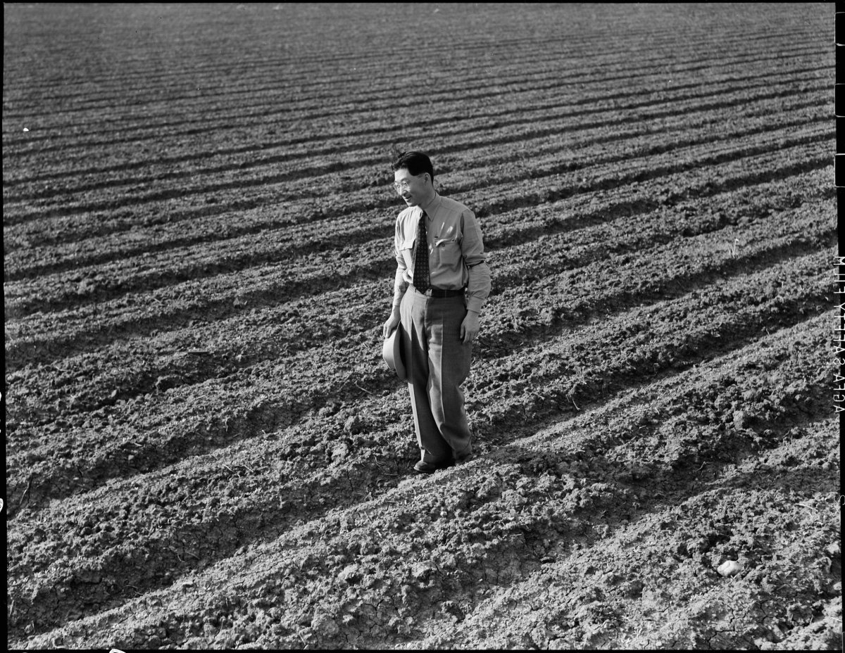 PRINT AVAILABLE Mountain View, California. Henry Mitarai, 36, in one of his sugar beet fields on his mechanized farm, prior to evacuation. His payroll ran as much as 8,000.00 a year. Farmers and other evacuees of Japanese descent will be given opportunities to follow their callings at War Relocation Authority centers where they will spend the duration.