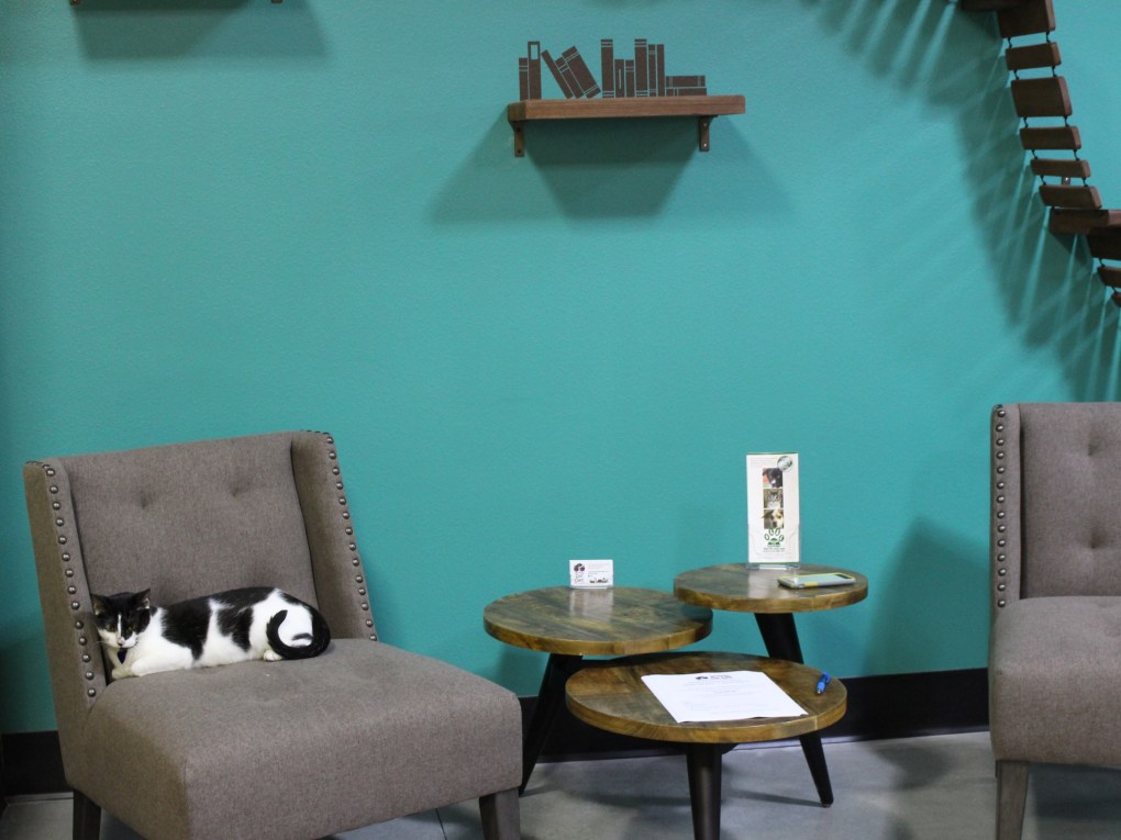 Cats get cozy after a short while of playing at the grand opening of the Orlando Cat Cafe. Cats are up for adoption through The Animal League, and customers buy coffee just down the hallway in Axum Coffee. Guests take time in both the coffee lounge and the kitty playroom Thursday.