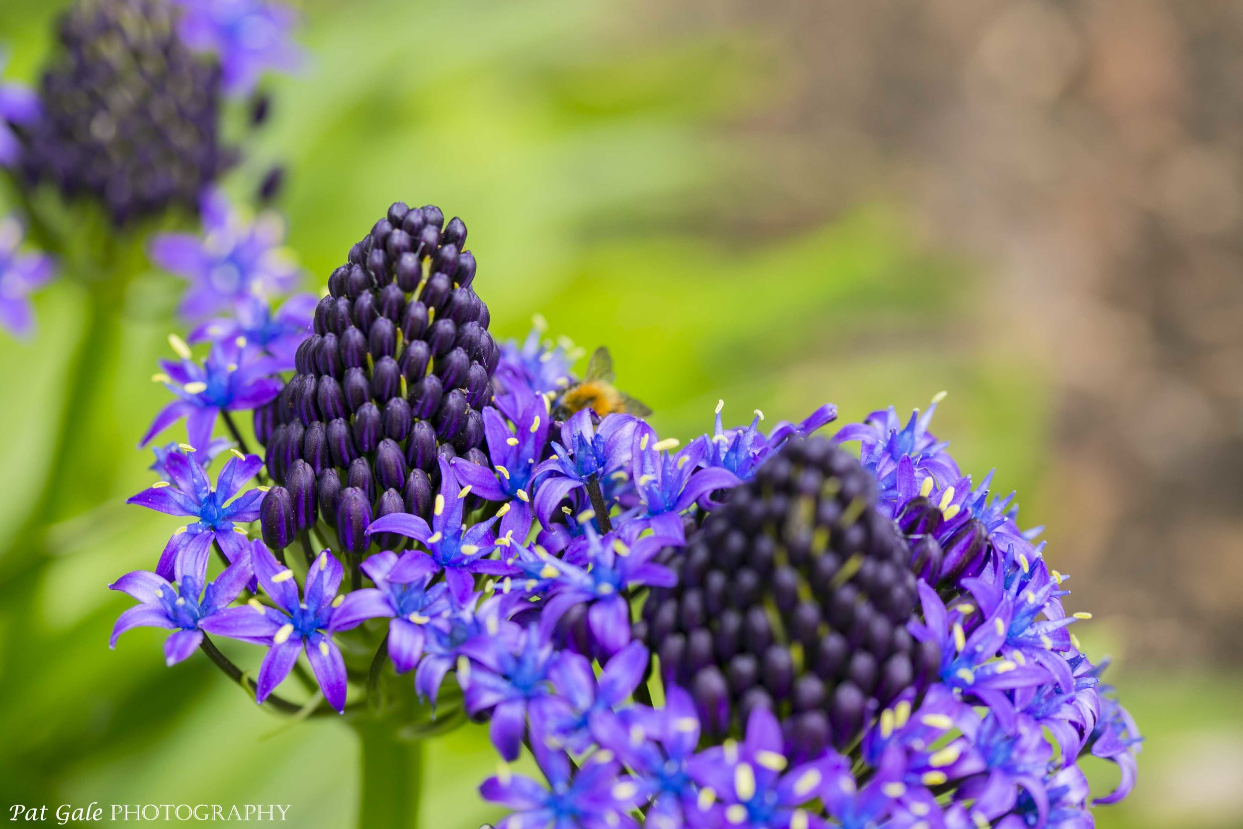 Flowers  Blue     Pat Gale Photography a9 jpg
