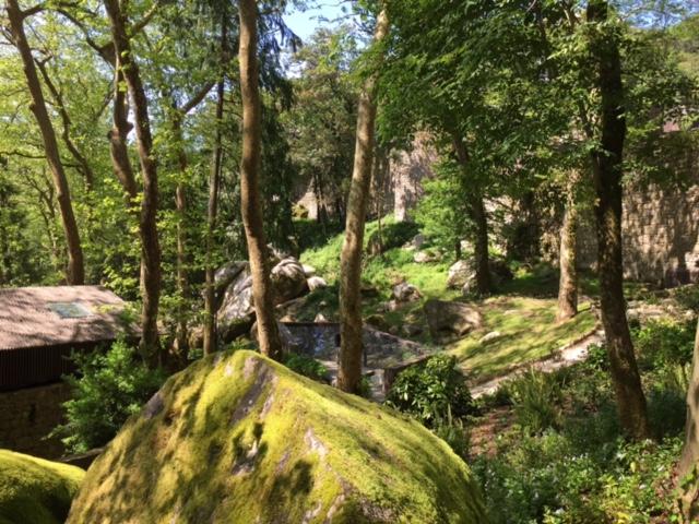 Verdant path to the Castle