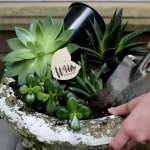 Wild Interiors Creating A Diy Planter With Houseplants