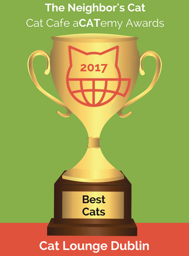 2017 Best Cats.png