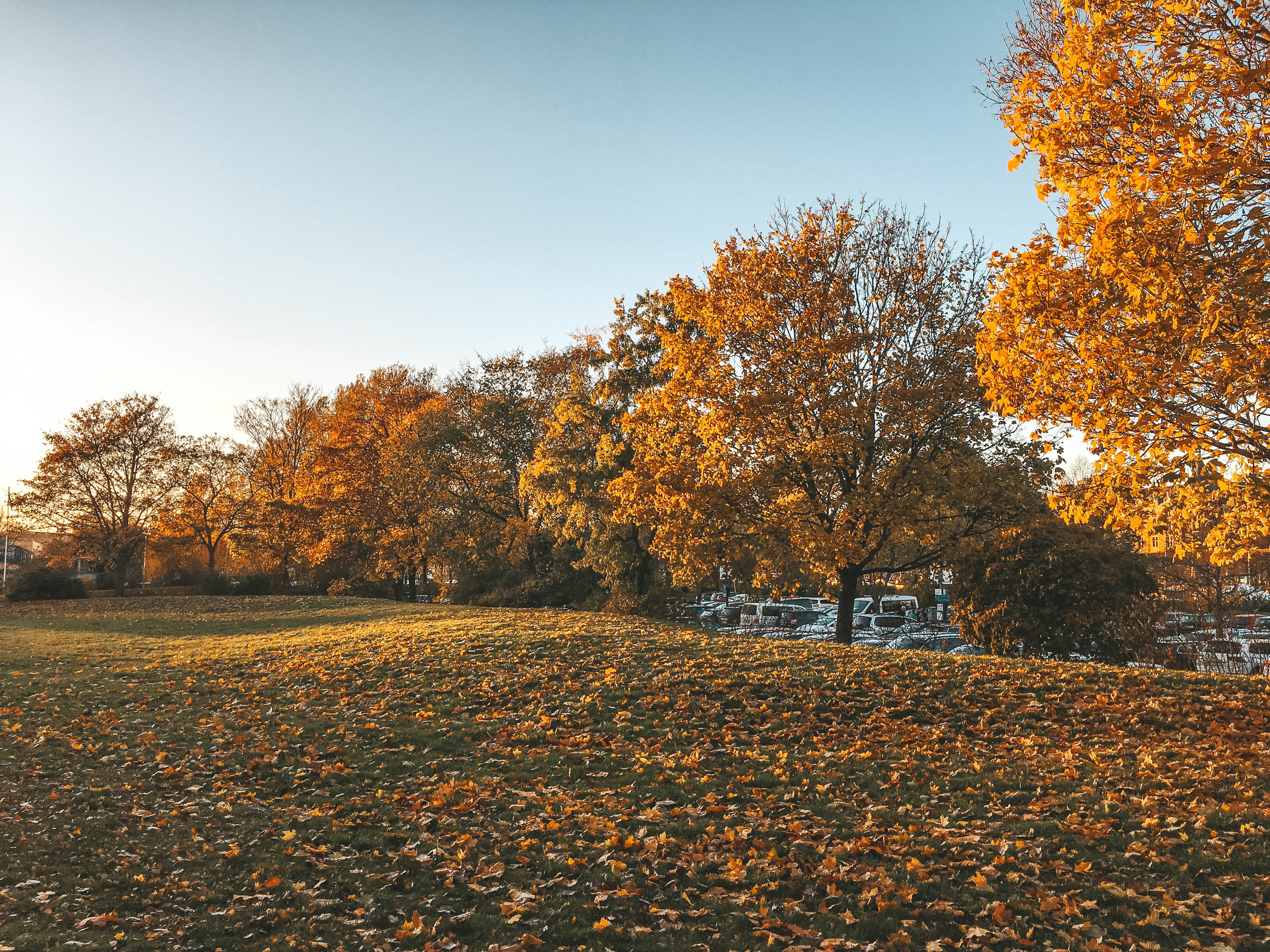 Photo Diary: Autumn in Stockholm, Sweden 4