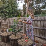 How To Grow Fruit Trees In Containers Connie And Luna