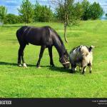 Beautiful Black Horse Image Photo Free Trial Bigstock