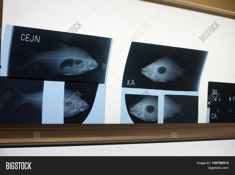 Fish X Ray Light Panel Image Amp Photo Free Trial