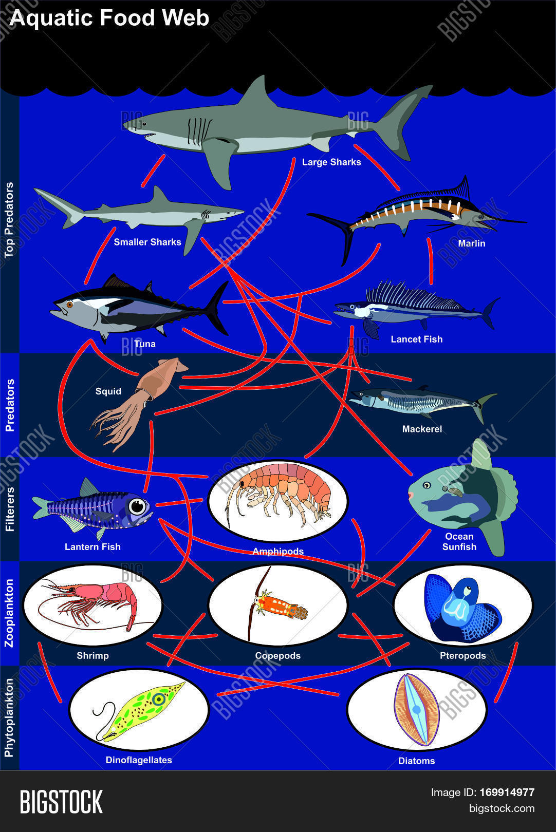 Aquatic Food Web Image Amp Photo Free Trial