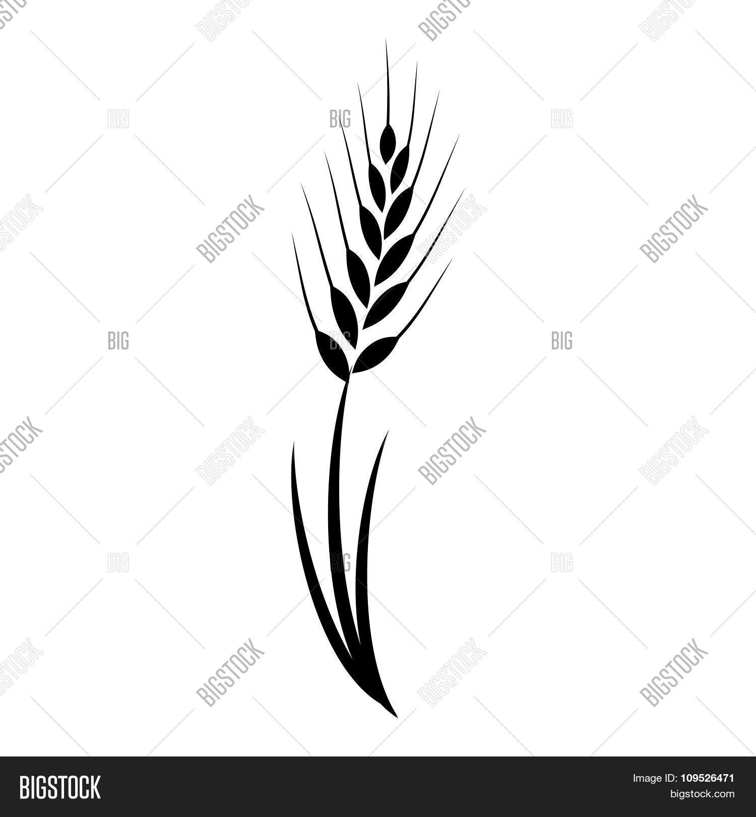 Wheat Grass Green Icon Juice Black Vector Amp Photo