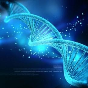 DNA-Code geknackt: Unsterblichkeit?