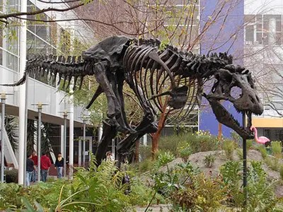 Image result for google dinosaur