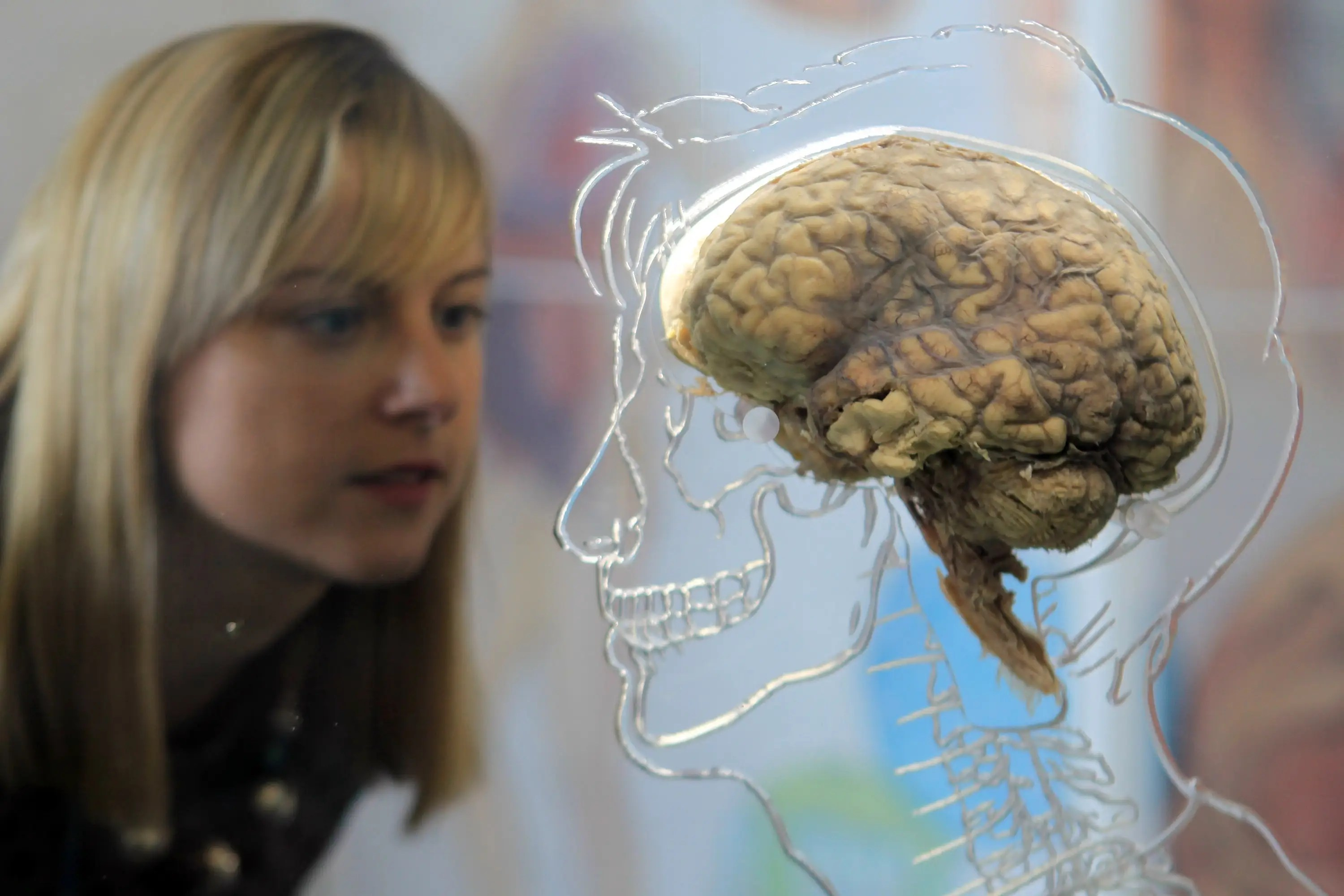 """People don't use """"just 10%"""" of their brains. We use the entire brain for different processes at different times.  We couldn't survive if we scooped out 90% of it."""