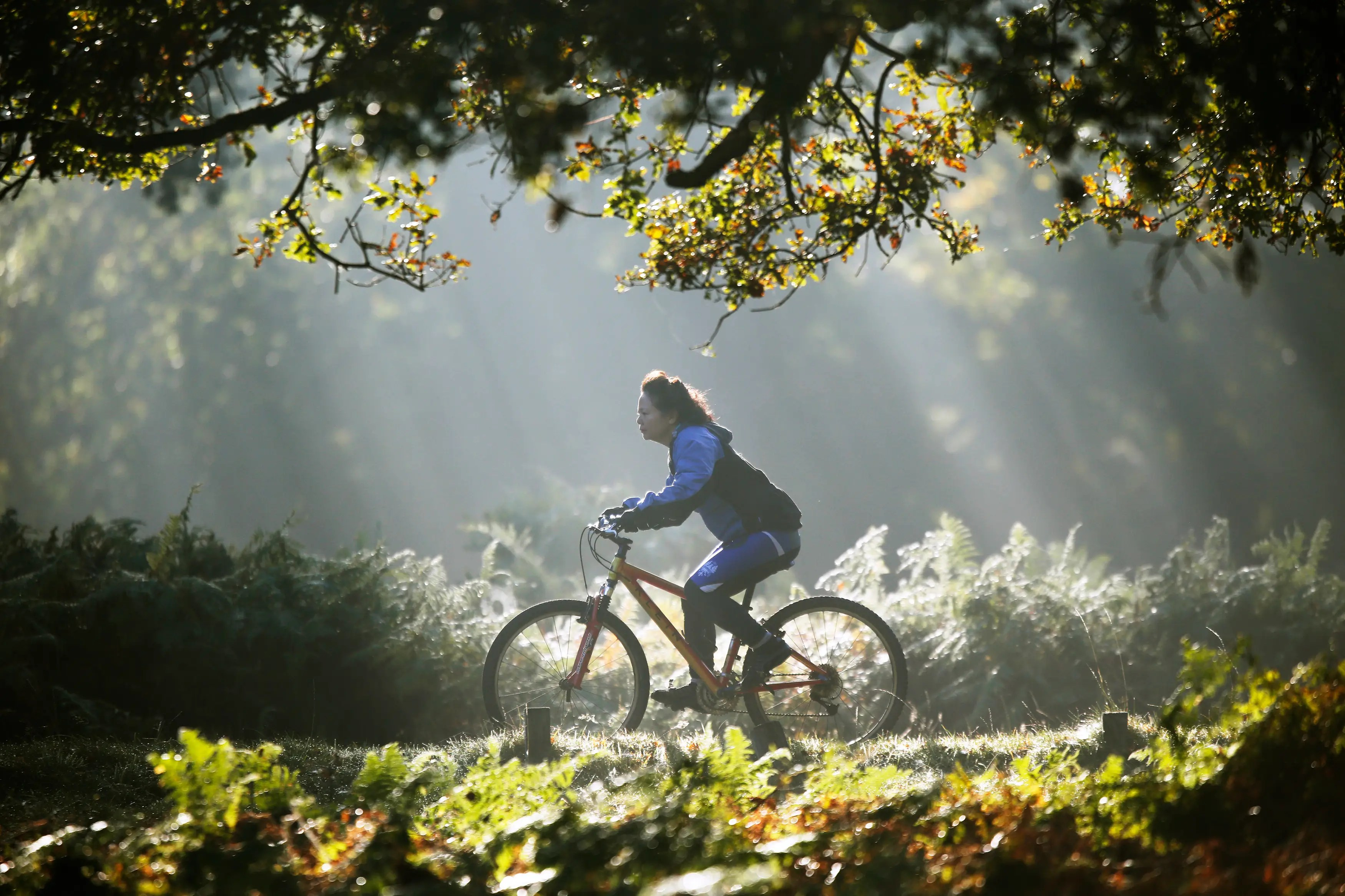 A woman cycles in the early-morning autumn sunshine in London's Richmond Park.