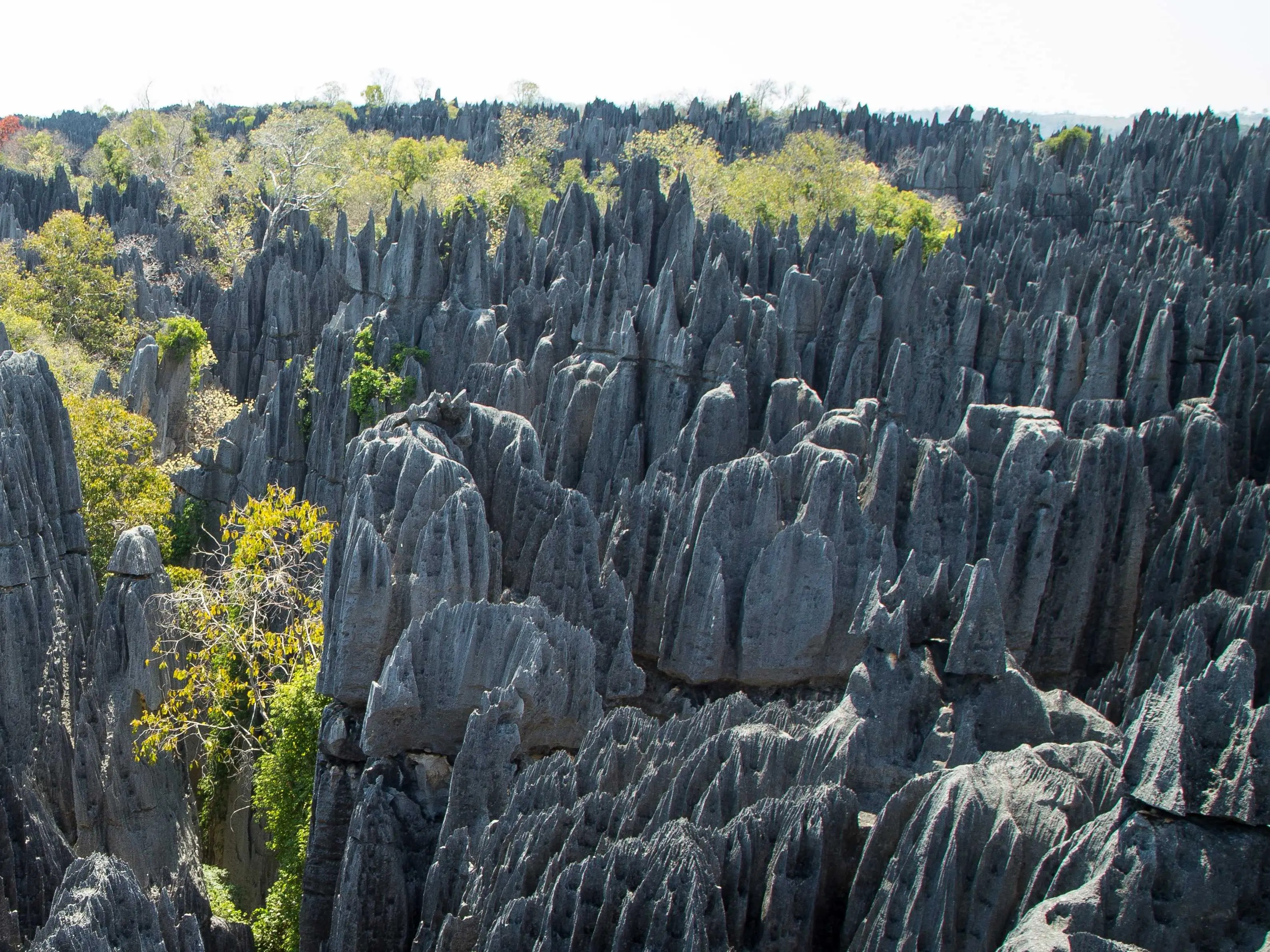 "Tsingy de Bemaraha Strict Nature Reserve, in the district of Antsalova in Madagascar, is made of needle-like limestone formations called ""tsingy peaks"" where rare species of birds and lemurs reside."