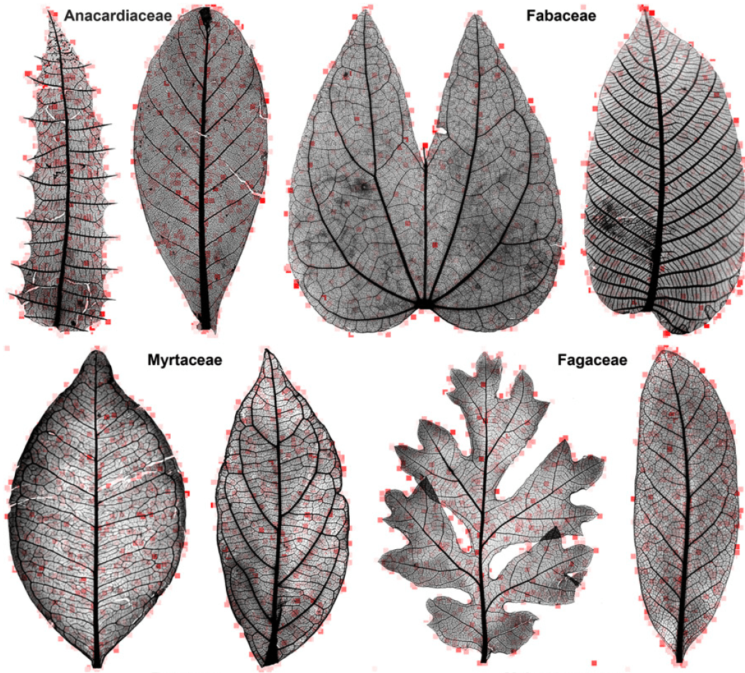Teaching Computers To Identify Plants