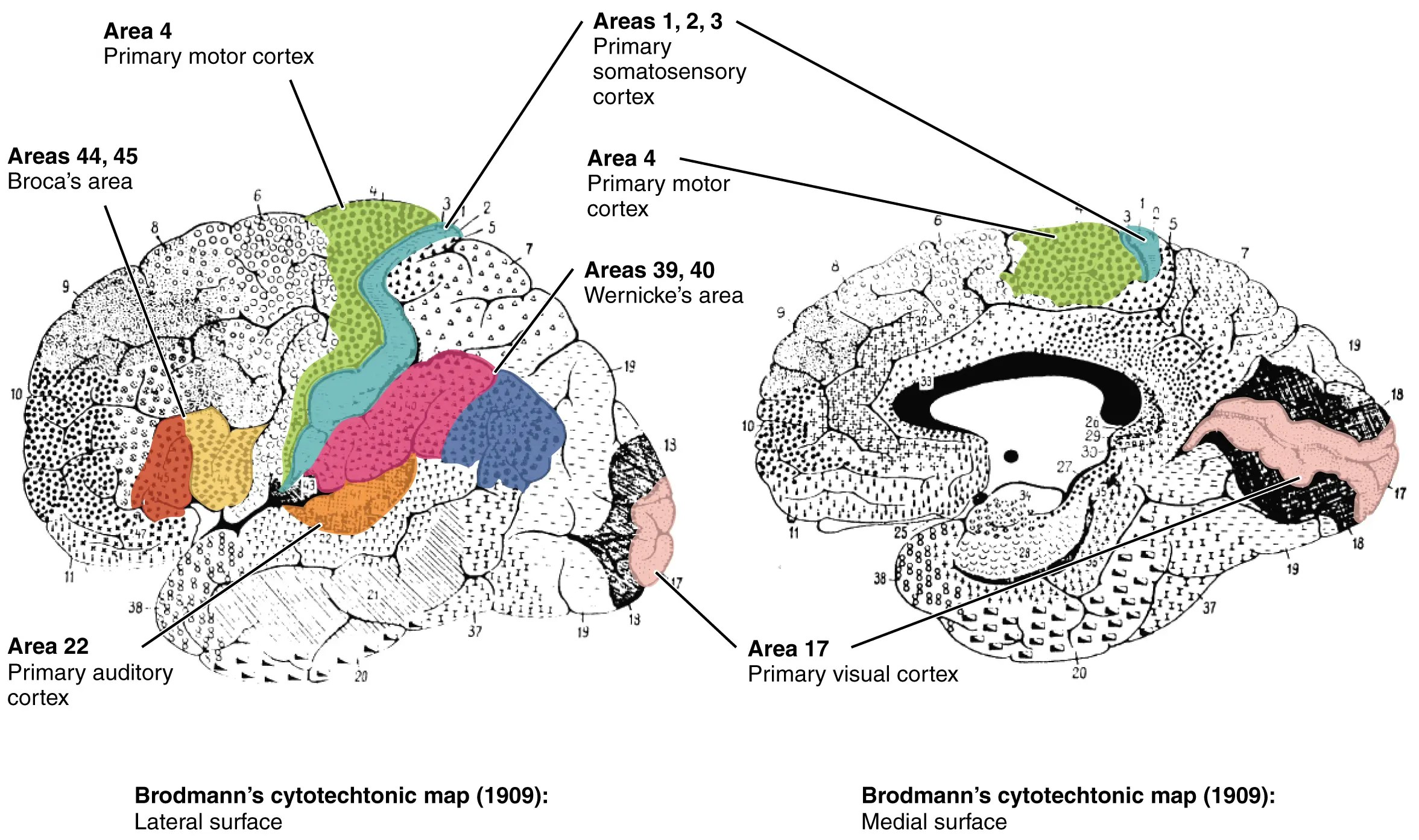 New Brain Map Accomplishes What Scientists Have Been