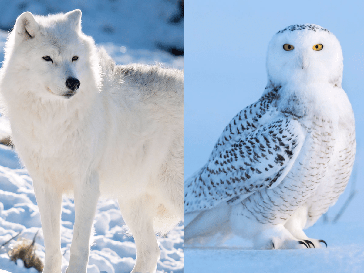 Things You Never Knew About 15 Animals Who Live In The