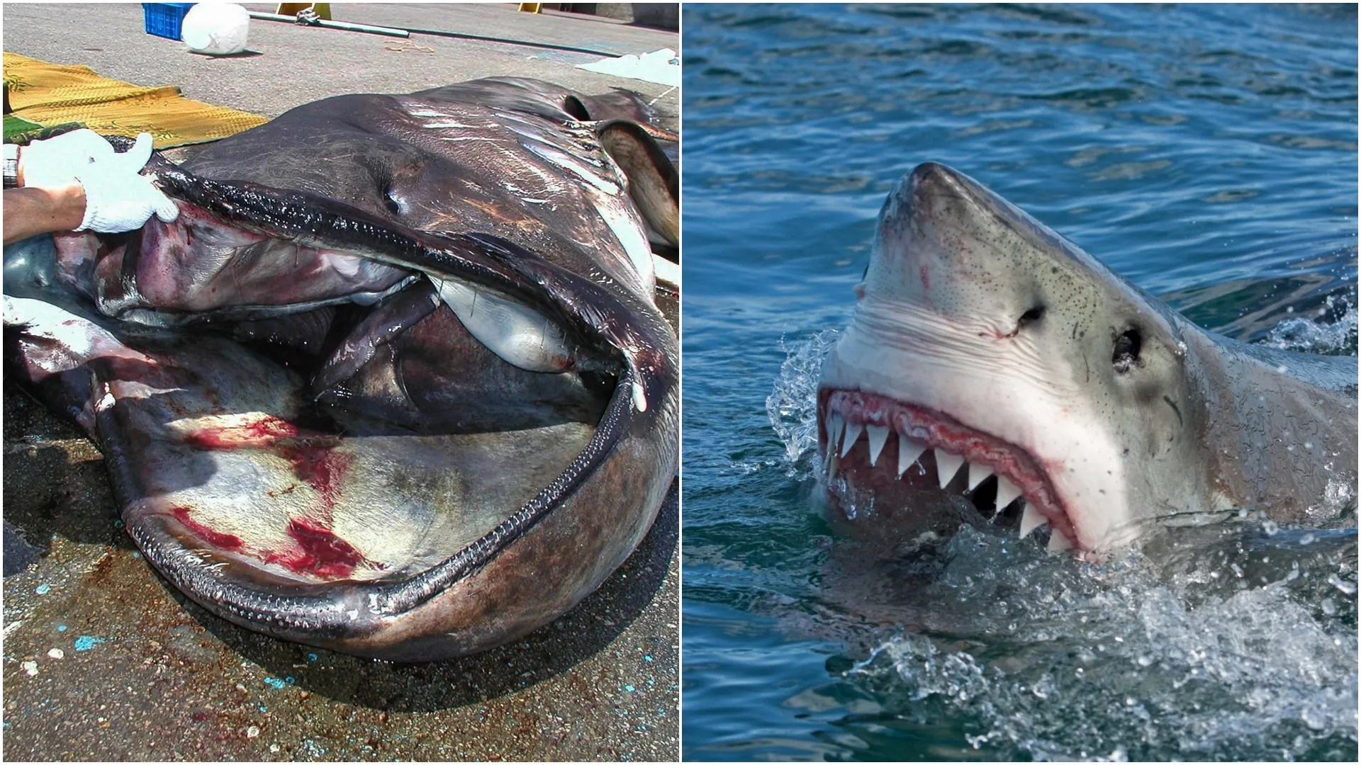 The 15 Most Terrifying Types Of Sharks In The World