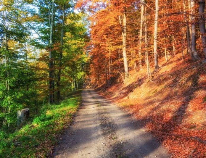 Một khu rừng sắp sửa sang thu, dường như nó chỉ mới tải được 50% quá trình chuyển mùa của mình.