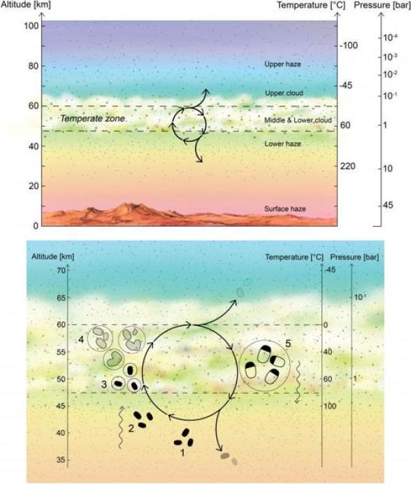 """El gráfico muestra la capa """"habitable"""" de la atmósfera de Venus (imagen superior) y el ciclo de vida propuesto por los investigadores (imagen inferior)"""