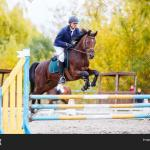 Young Rider Man On Bay Image Photo Free Trial Bigstock