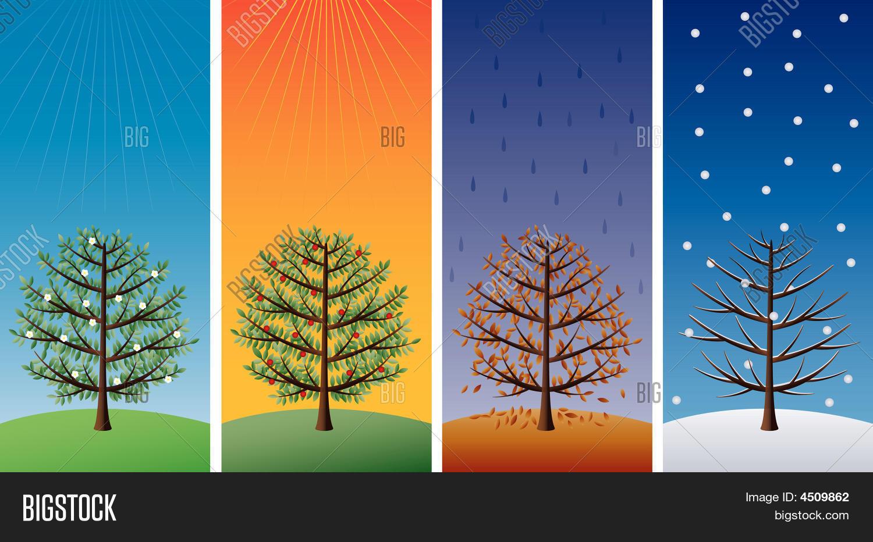 Four Seasons Trees Vector Amp Photo