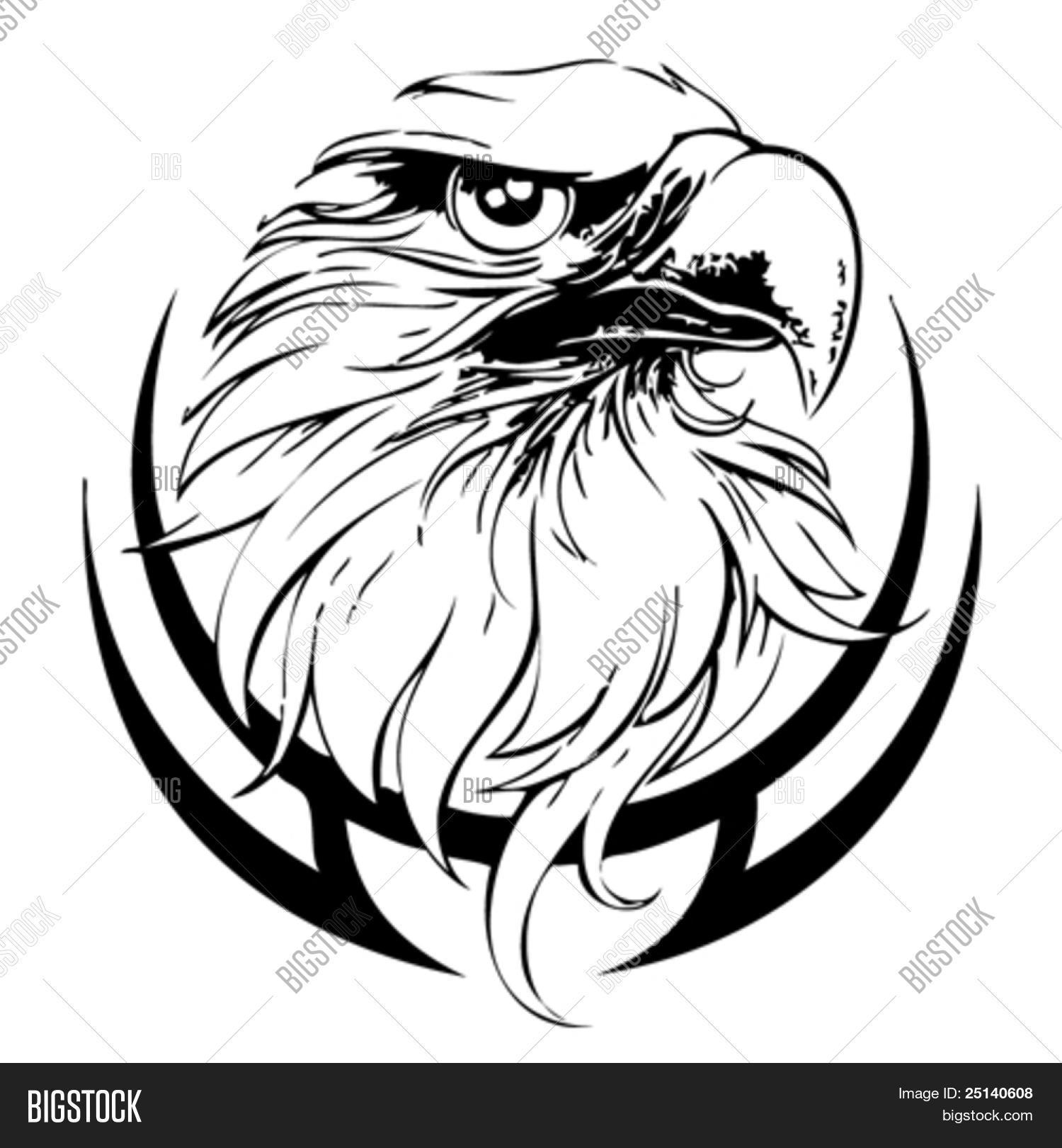Eagle Head Line Art Vector Vector Amp Photo
