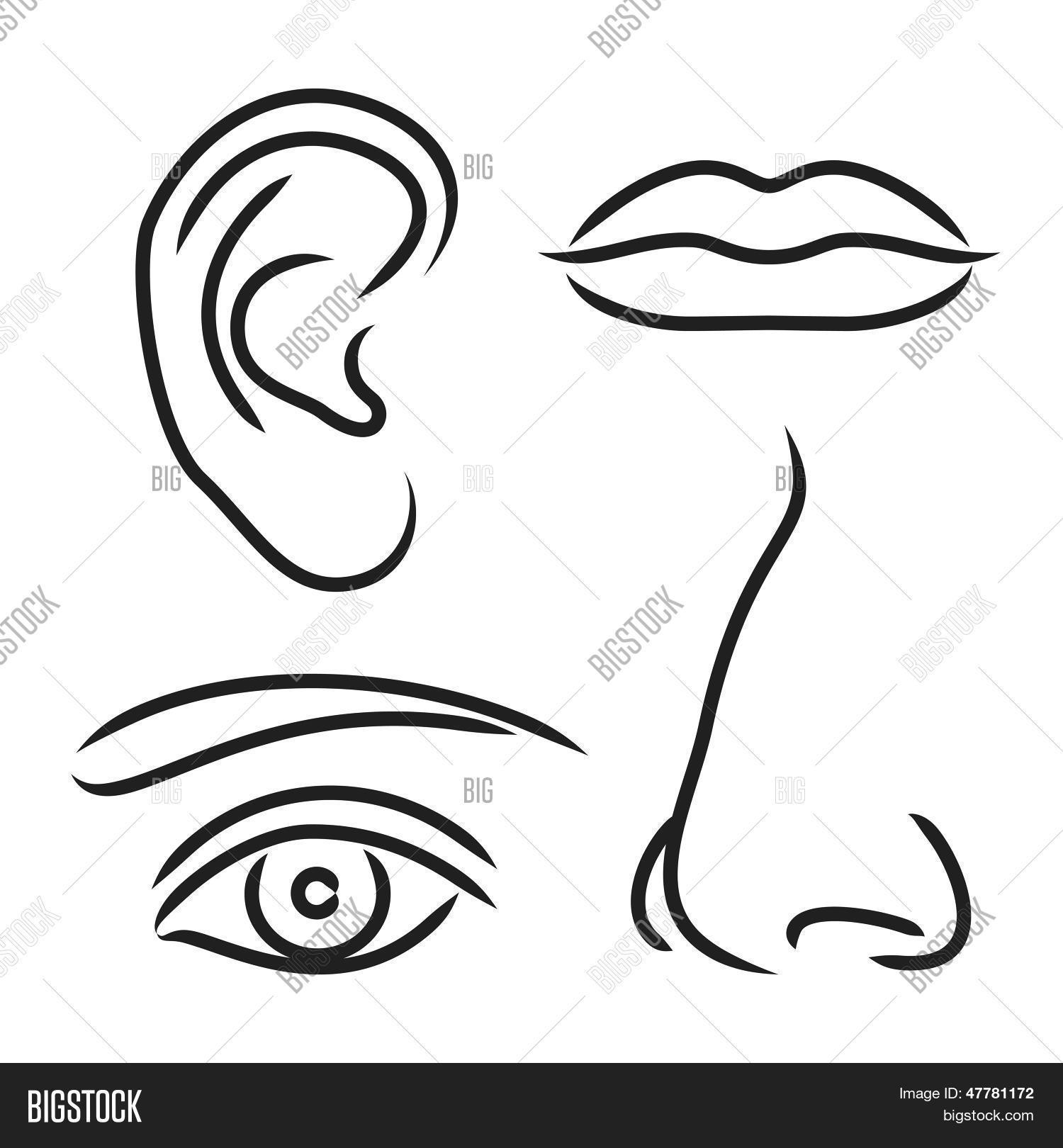 Vector Illustration Nose Ear Mouth And Eye Stock Vector