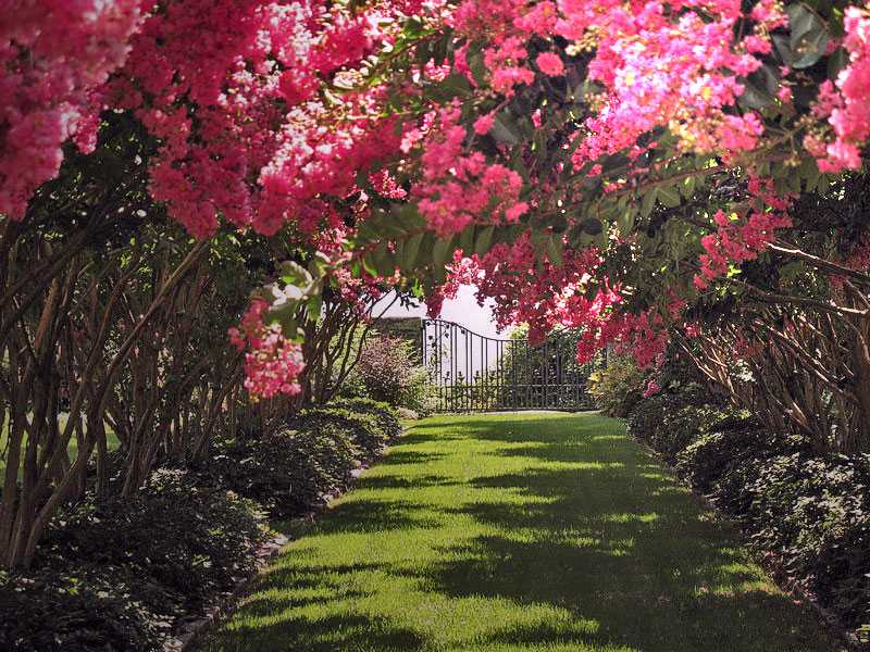 There are so many secret garden pathways you could lose yourself in the flowers.