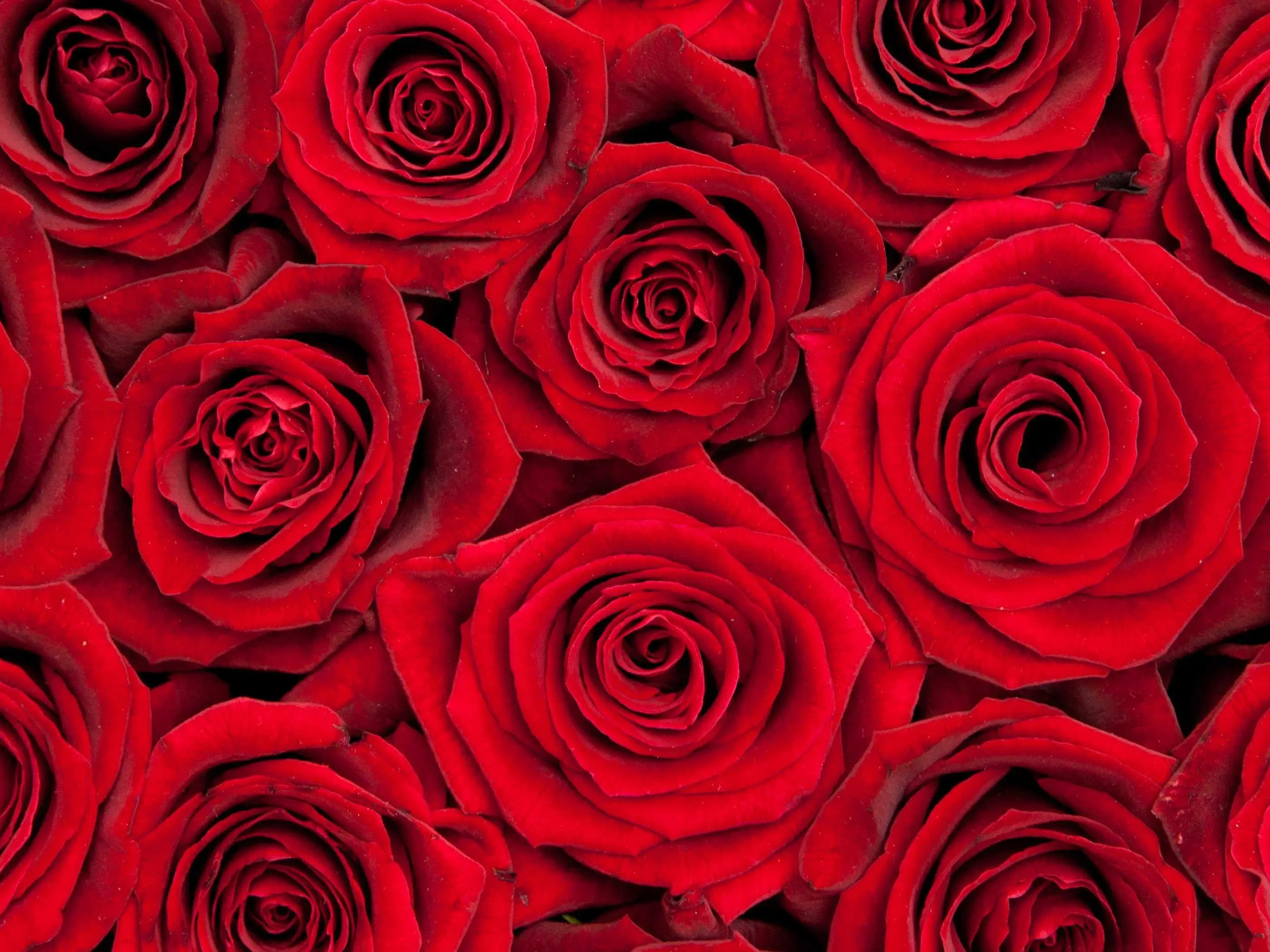 Rose Bouquet Pricing Variation Business Insider