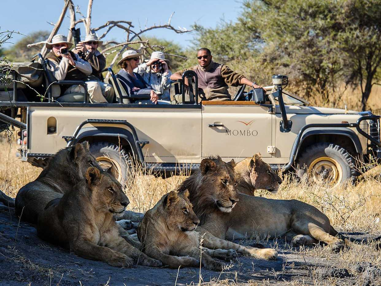 Go on safari in Botswana, where you can see all types of game.