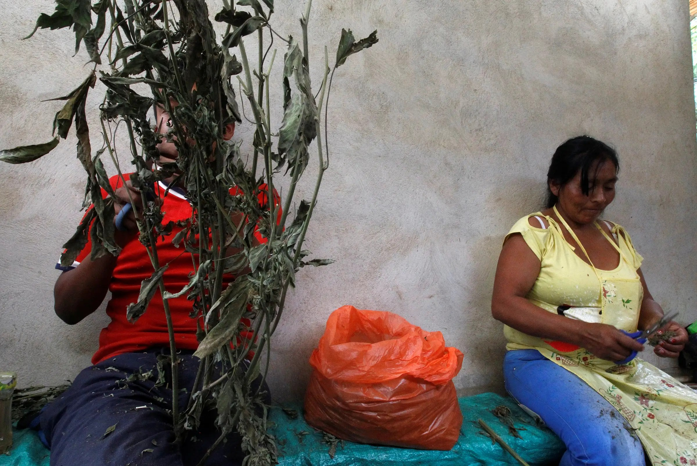 Colombia drug production trafficking marijuana