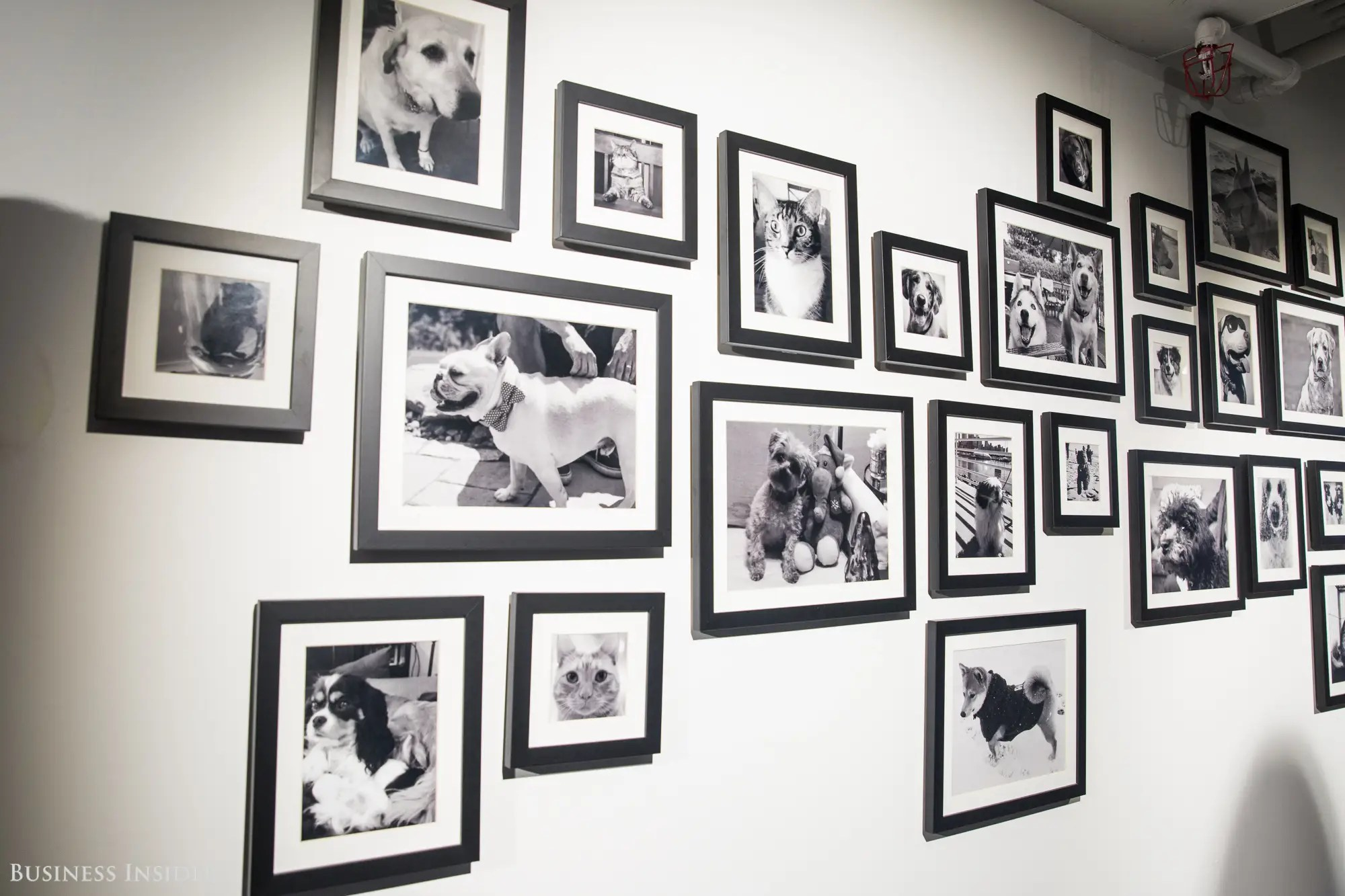 Other fun art we spotted: the wall of pets. Employees aren't permitted to bring animals to work due to the building's policy. As a result, the workplace team at LinkedIn's Manhattan office established a pet wall, featuring photos of workers' furry friends.