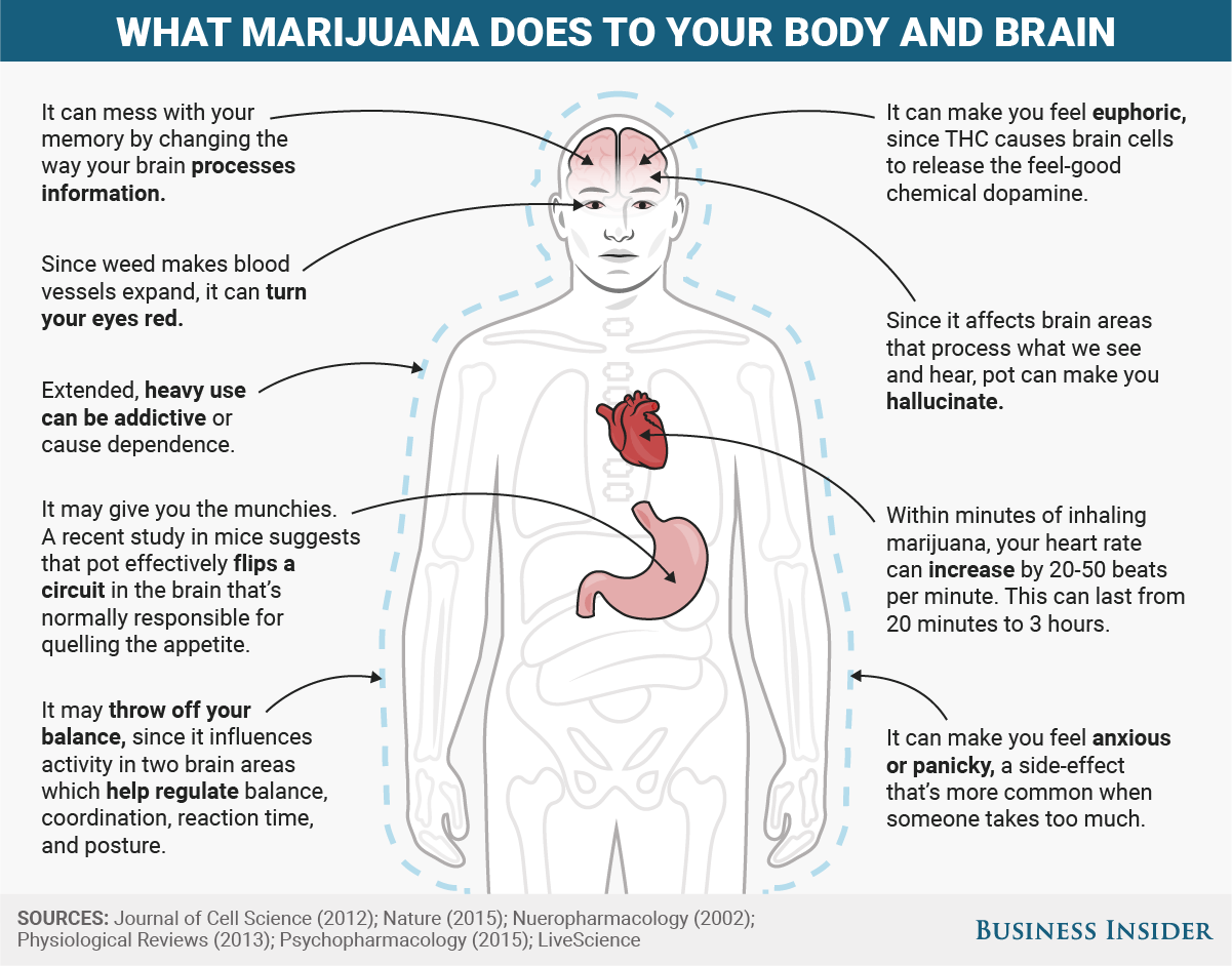 What Popular Drugs Do To Your Body And Brain