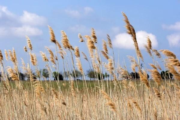 Красивые суккулентных растений на лугу — Стоковое фото ...