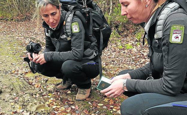 La patrulla Oso Cantábrico Oriental examina un rastro de oso.