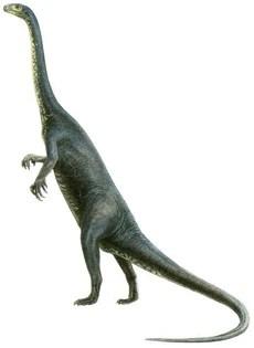 Gryponyx