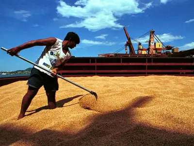 Domestic soybean prices should pick up in the first half of 2013 because of improved soybean trade
