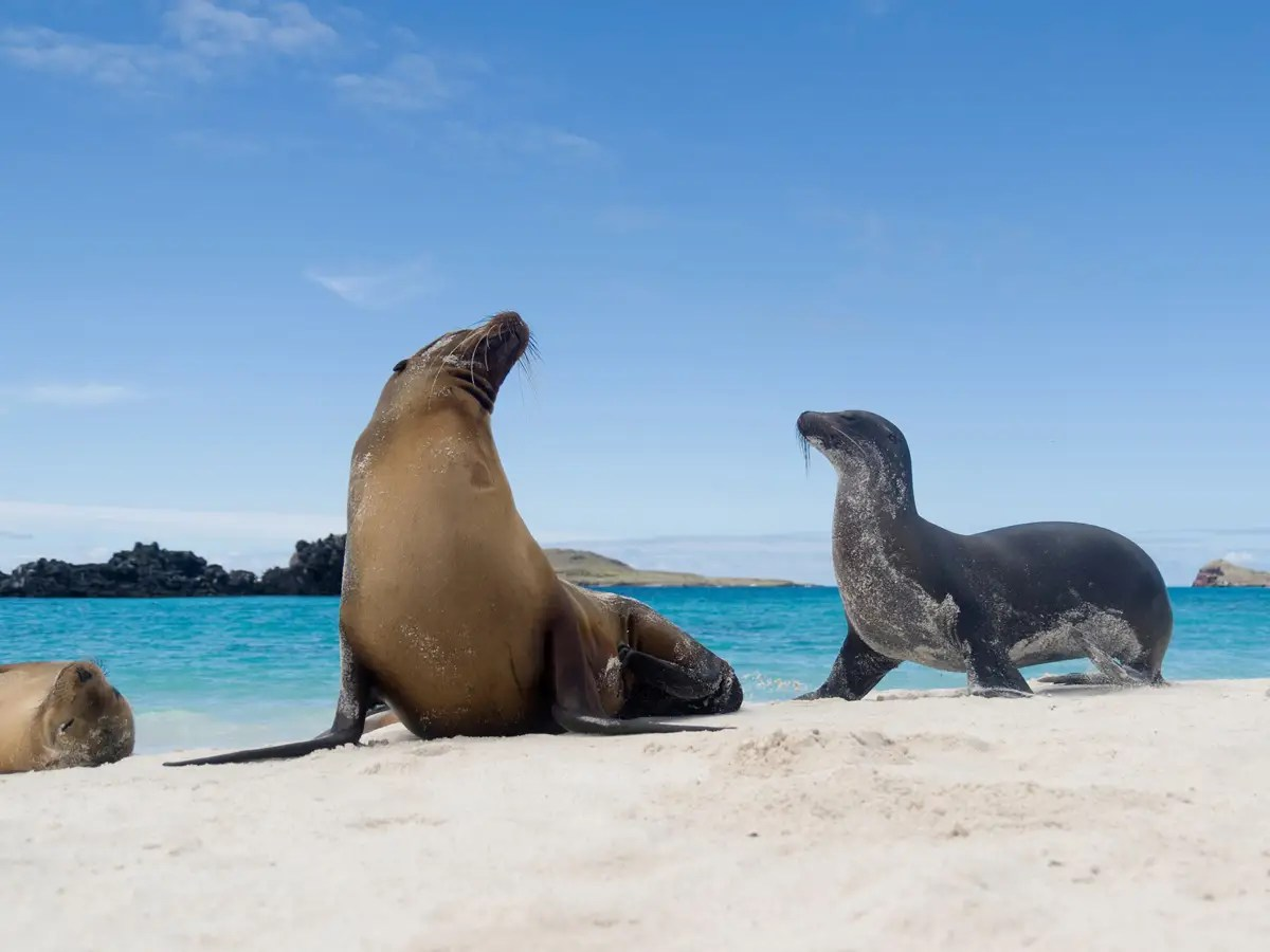 See giant tortoises and sea lions in the Galapagos Islands.