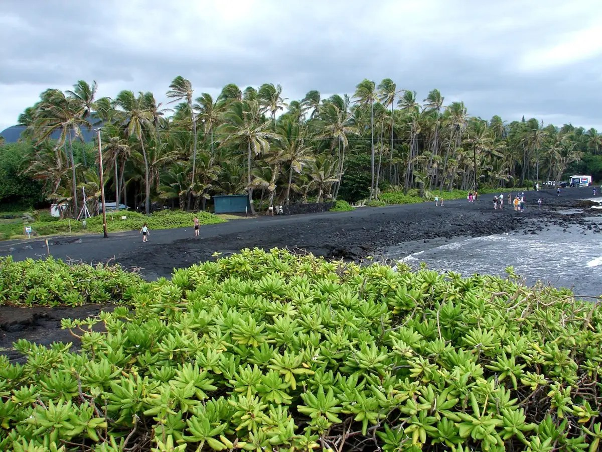 Hawaii's Punalu'u Beach is famous for its black sand, which comes from the island's volcanic activity. Hawksbill and Greenback turtles frequently nest on this Hawaiian beach.