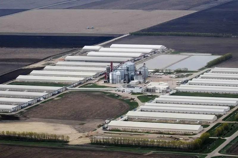 An egg-producing chicken farm run by Sunrise Farm is seen in this aerial photo in Harris, Iowa, April 23, 2015. REUTERS/Joe Ahlquist