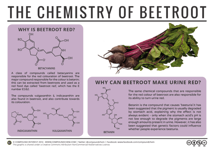 "If you're a lover of beets then you've probably had a few cases of ""beeturia,"" the passing of reddish urine. This discoloration happens when the acid in our stomachs isn't strong enough to break down betanin — the compound that makes beets red."