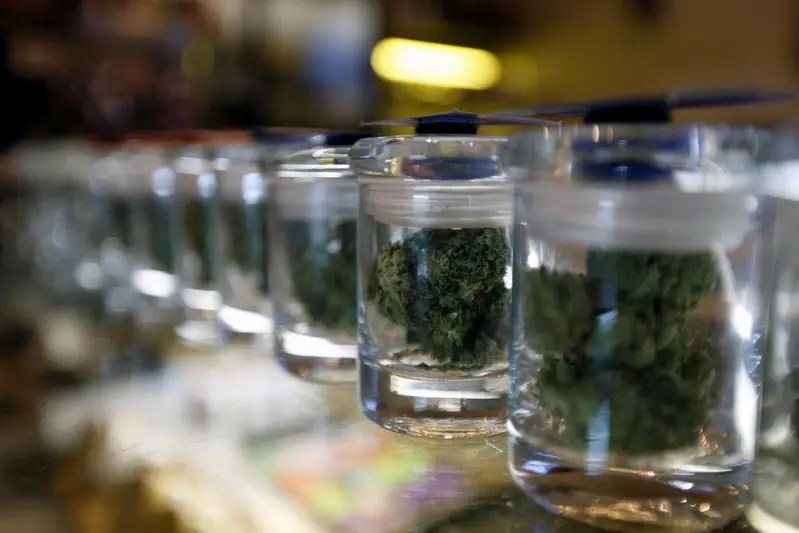 A variety of medicinal marijuana buds in jars are pictured at Los Angeles Patients & Caregivers Group dispensary in West Hollywood, California U.S., October 18, 2016. REUTERS/Mario Anzuoni