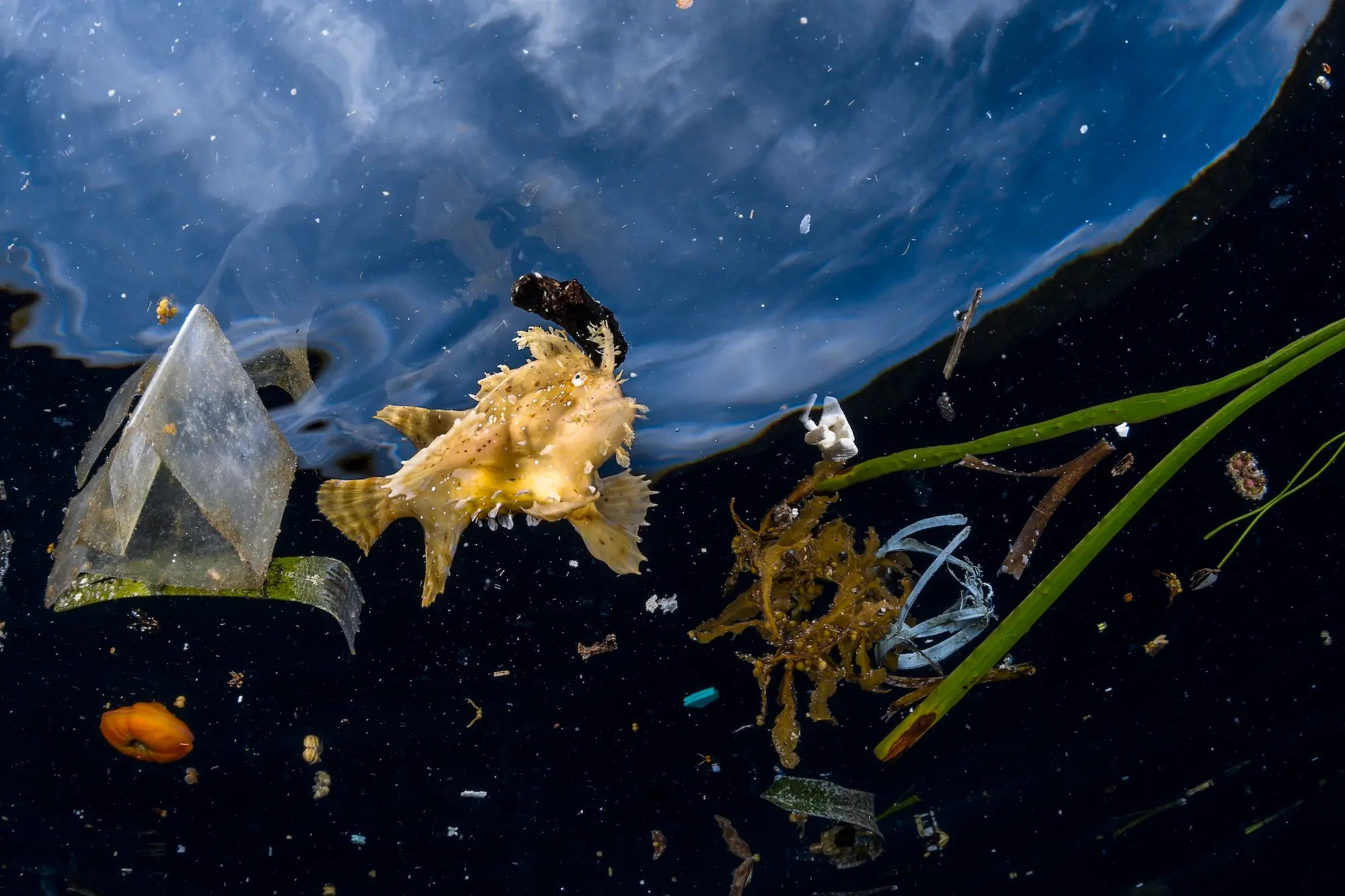 The most gorgeous wildlife photos of 2018 shine a light on nature's bizarre and wonderful beauty french photographer greg lecoeur found this frogfish surrounded by plastic bits in raja ampat indonesia
